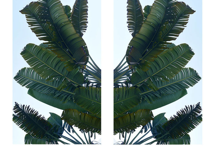 Perfect Green Diptych, by Debra Somerville, Fine Art Photography, Botanicals