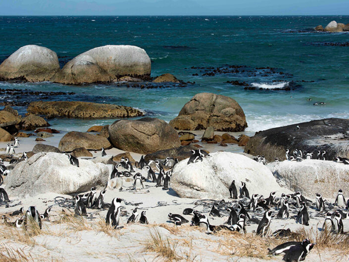 Debra Somerville Photo, Photography, Photographer, Southern Florida, Fine Art Africa, PENGUIN RETREAT