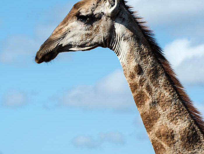 Debra Somerville Photo, Photography, Photographer, Southern Florida, Fine Art Africa, STICKING YOUR NECK OUT